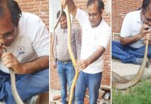 -Income-tax-officer-rescues-snake-life-in-trouble-in-indore