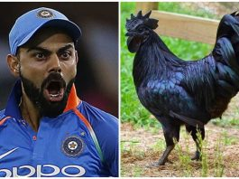 BCCI-adviced-to-indian-team-and-kohli-for-eating-jhabua-kadaknath