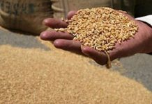 Wheat-procurement-at-support-price-from-March-25