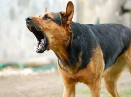 Dog-Terror-in-bhopal-madhyrpadesh-