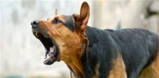 Dog-Terror-in-bhopal-madhyrpadesh-