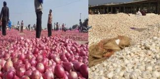 Onions-garlic-prices-down-in-malwa-madhya-pradesh-farmers-in-panic-