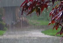 one-percent-less-rainfall-in-the-madhya-pradesh-