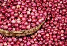 Onion-and-Garlic-Price-down-in-neemuch