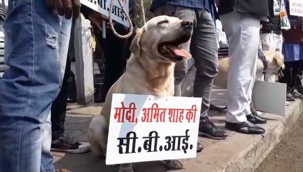 NCP's-unique-protest-in-bhopal-against-cbi-and-modi-government