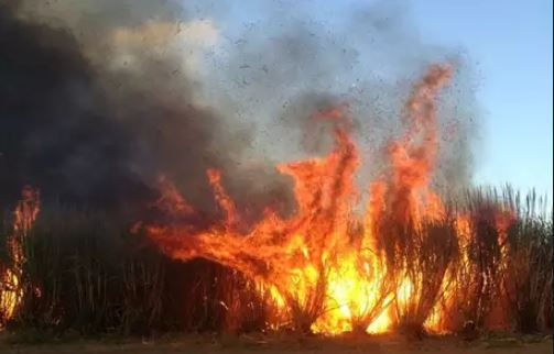 Bhopal-collector-order-not-to-burn-crops-