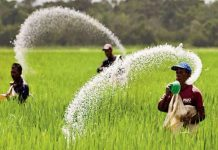 mp-government-Tough-on-black-marketing-of-urea-FIR-on-two-fertilizers-dealers