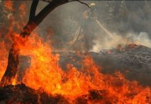 satellite-survey-highest-fire-in-the-forests-of-Madhya-Pradesh