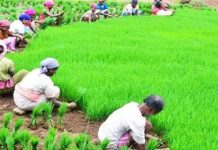 Farmers-who-are-learning-to-save-environment