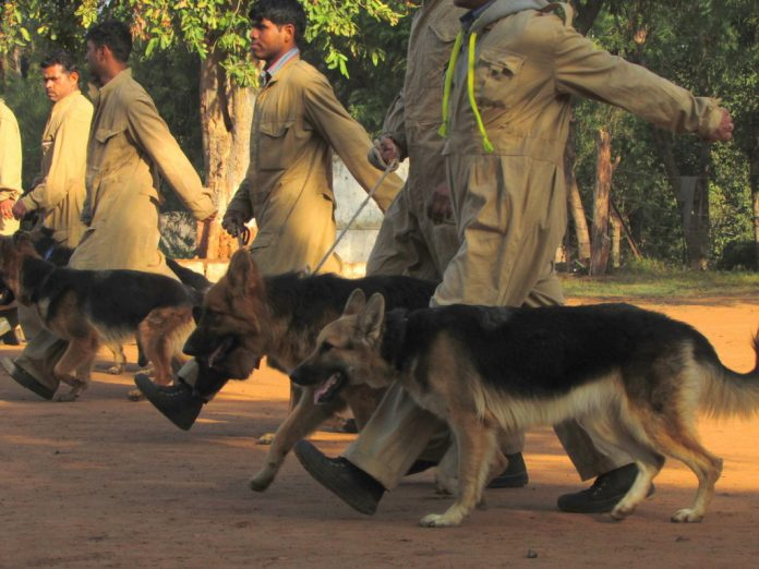 police-department-transfer-of-dogs-in-mp