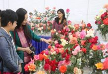 rose-exhibition-in-bhopal