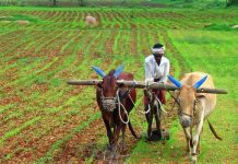 politics-again-on-farmers-in-loksabha-election--bjp-will-attack-on-debt-waivers-
