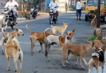 -Terror-of-stray-dogs