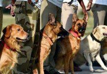 police-dogs-transfer-in-madhya-pradesh-bjp-attack-