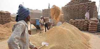 government-gives-guarantee-to-26-thousand-crore-for-wheat-procurement-mp
