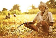 MP--Farmers-can-get-'debt-waiver'-certificate-on-January-1