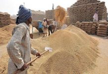 action-against-two-center-charges-for-buying-non-standard-wheat-katni-MP