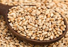 Are-the-harmful-wheat-for-health