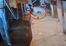 -Dogs-terror-in-bhopal--byte-four-year-old-innocent