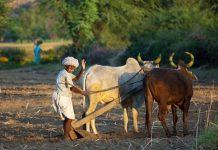 Modi-govts-next-bonanza-Loan-waiver-for-farmers-who-own-less-than-10-acre