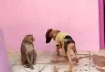monkey-annoying-dog-video-viral