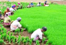 five-lakh-farmers-debt-will-be-waive-off-today