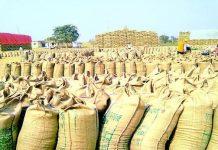 madhya-pradesh-hindi-news-Wheat-Procurement-at-minimum-Support-Price