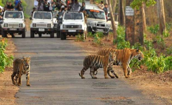 Now-to-wait-for-two-months-to-visit-Tiger-Reserve