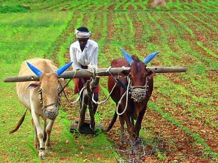 agriculture-minister-sachin-yadav-said-Debt-relief-the-process-will-start-again