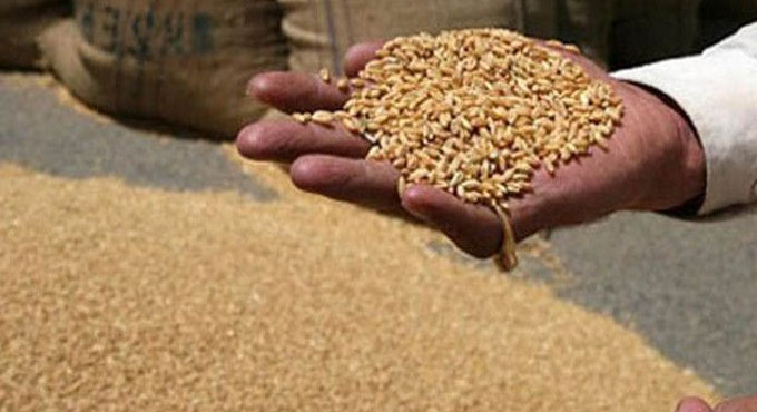 11-thousand-metric-tons-of-wheat-is-become-problem-of-administration-