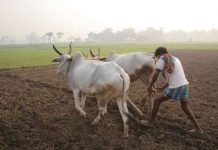 Bhopal-Farm-loan-to-be-waived-in-installments