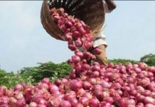 onion-purchase-scam-in-mp