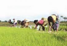 Farmers in MP