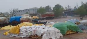 छतरपुर : बारदाने की मांग को लेकर अनिश्चितकालीन धरने पर बैठे किसान