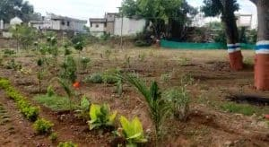 विश्व पर्यावरण दिवस : पर्यावरण विभाग ने कर्मचारियों को दिया पौधा, किया अपने घरों में लगाने का अनुरोध