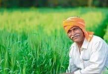 कृषि मंत्री